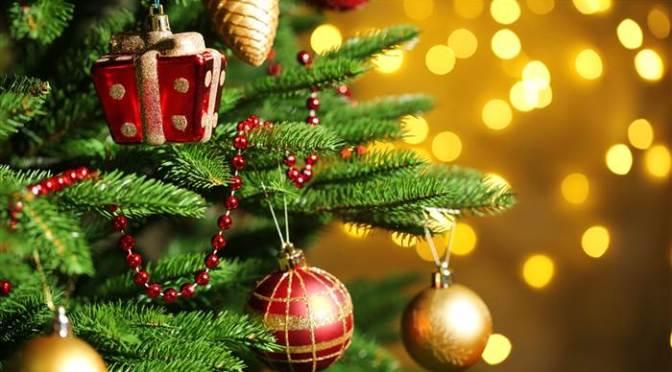 Christmas Tree Festival Update